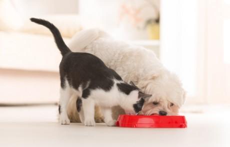 השמנה בכלבים ובחתולים