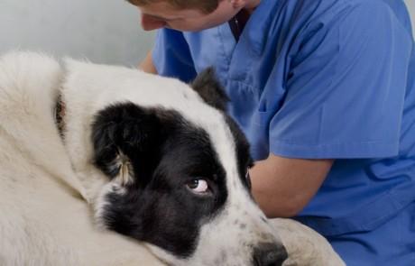 אפילפסיה בכלבים וחתולים